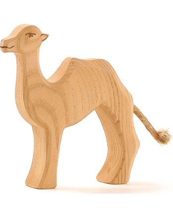 Ostheimer petit chameau